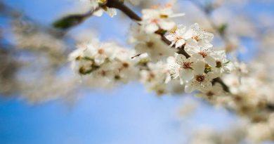 Významné květnové dny